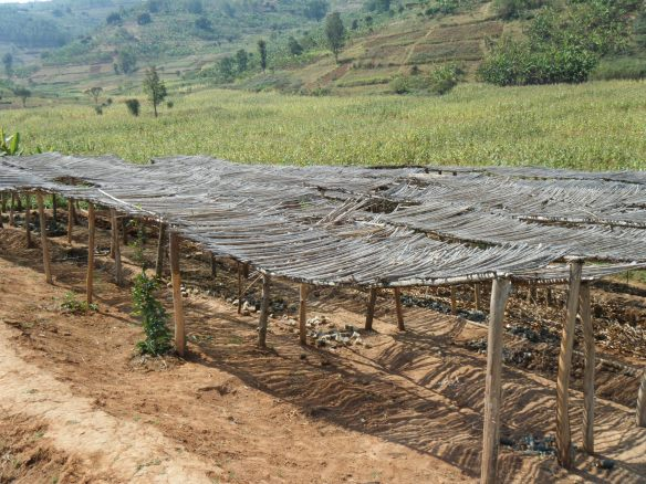 Tree nursery rehabilitation for Year 2 - Ending Poverty One Village at Time (EP1VAT)
