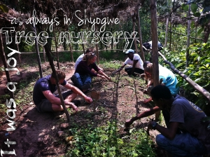 RDSI-Shyogwe Tree nusery