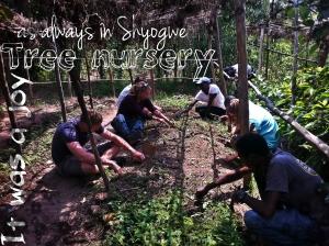 RDSI-Shyogwe Tree nusery